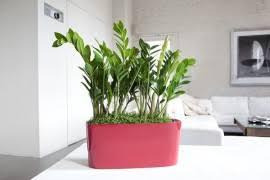 Indoor Plant Vases 10 Beautiful Indoor House Plants Ideas