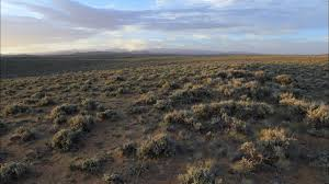 tundra native plants conserving the sagebrush sea the place u201cin between u201d blog