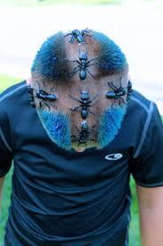 7 best spirit week images on pinterest crazy hair days crazy