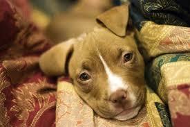 pet euthanasia no cost pet euthanasia tips to save money when euthanizing a pet
