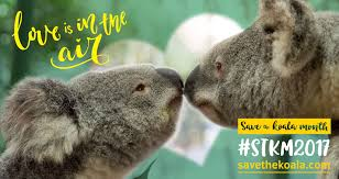 september is save the koala month animal fact guide