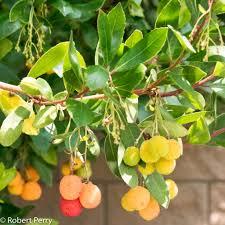 fruit tree garden layout arbutus unedo inland valley garden planner