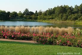 grasses for informal garden hedges knoll gardens ornamental