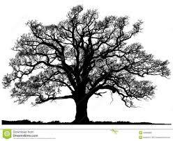 best 25 oak tree silhouette ideas on tree designs