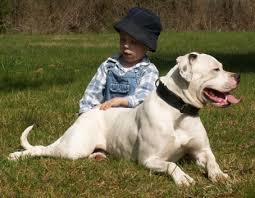 australian shepherd 4 monate gewicht gewicht des ab american bulldog hundeforum hundund