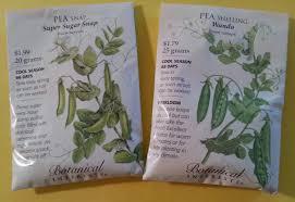 peas u2013 shell or snap u2013 crazy for gardening