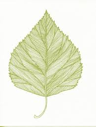 birch leaf print of original pen and ink drawing green 22 00