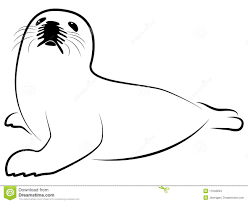 harp seal clipart pencil and in color harp seal clipart