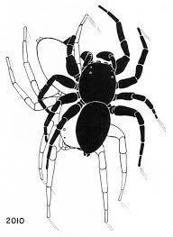 very odd behavior spidersrule