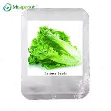 butter lettuce seeds lettuce seeds potted garden non gmo organic