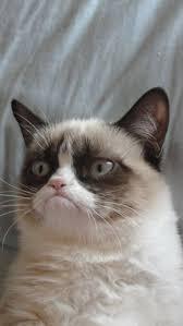 Image 9 Best Grumpy Cat - 9 best grumpy cats images on pinterest grumpy cat grumpy cat meme