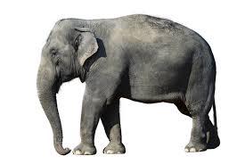 elephant animals for children kids videos kindergarten preschool