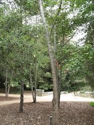 jardín botánico rancho santa ana mapio net
