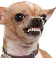 Dog Teeth Meme - angry dog showing teeth blank template imgflip