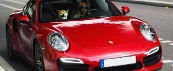 Doge Meme Car - girl giving her shiba inu a ride in her porsche 911 turbo is doge