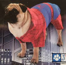 funny fun lol animals spiderman halloween costumes pics images