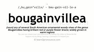 bougainvillea pronunciation and definition