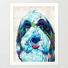 bearded collie mdr1 pin by cindy dorsten on collie fun pinterest