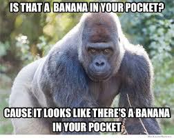 Gorilla Meme - seductive gorilla meme collection
