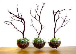 modern globe manzanita forest moss terrarium the green head