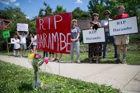 Botanical Garden Cincinnati Friday Vigil Set At Denver Zoo For Harambe Gorilla Fatally