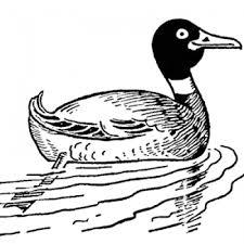 draw duck step step birds animals free