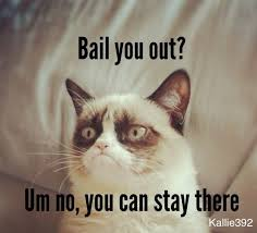 106 best quotes with cats images on pinterest ha ha adorable