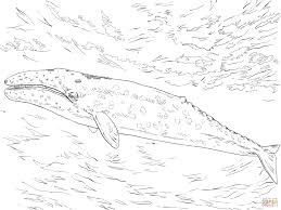 top 80 whale coloring pages free coloring page