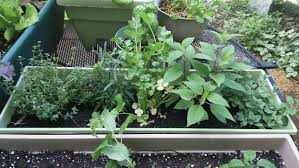 gardening on your patio the land connection