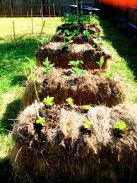 the glig life hay bale gardening