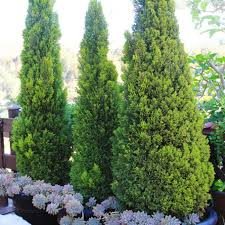 California Landscaping Ideas Southern California Gardening Evergreen Landscaping Ideas
