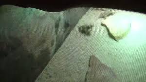 caring for desert horned lizards toads u0026 feeding youtube