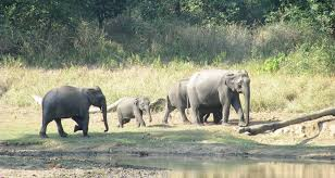 New Jersey wildlife tours images India wildlife adventure tour packages best wildlife tours in jpg