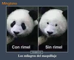 Memes De Pandas - frase con fotos divertidas de un oso panda antes y después de usar