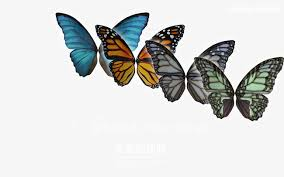 colorful butterfly pattern shading png and psd file for free