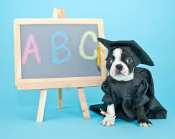 dog graduation cap and gown graduation puppy stock image image of school canine 41061107