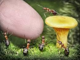 154 ants images ants insects