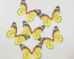 butterfly decoration etsy