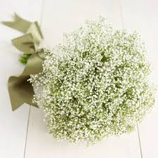 baby s breath bouquets baby s breath bouquet