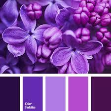 lilac color color palette 2950 color palette ideas lilac color lilacs and