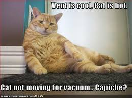 Cool Cat Meme - barks and blooms want to live with a cool cat this summer