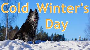 how to groom a belgian sheepdog cold winter u0027s day belgian groenendael style youtube