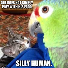 Parrot Meme - cat and parrot memes imgflip