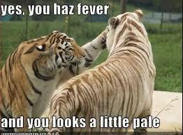 Funny Tiger Memes - funny memes skyblock forums