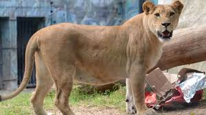 imagenes de los reyes magos y sus animales reyes magos premian a los animales del zoológico santa fe de