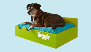 Pvc Pipe Dog Bed Raised Dog Bed