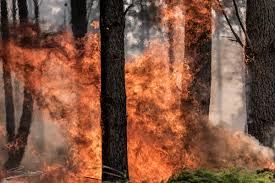 Elgin Oregon Wildfire by The Elgin Valley Fire In Pictures Sapeople Your Worldwide
