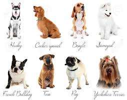 types of dogs different breeds of dogs stock photo picture and royalty free