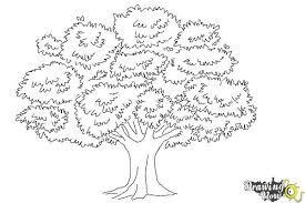 how to draw coloring pages how to draw a realistic tree drawingnow