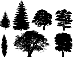 trees black and white clipart 63